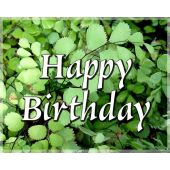 Gift Card: Happy Birthday