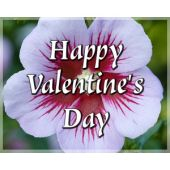 Gift Card: Happy Valentine's Day